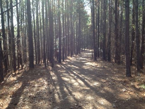 114 Acres Wilkinson CO : Woodville : Wilkinson County : Mississippi