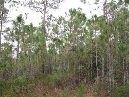 Remote Florida Hunting Land : Sumatra : Liberty County : Florida
