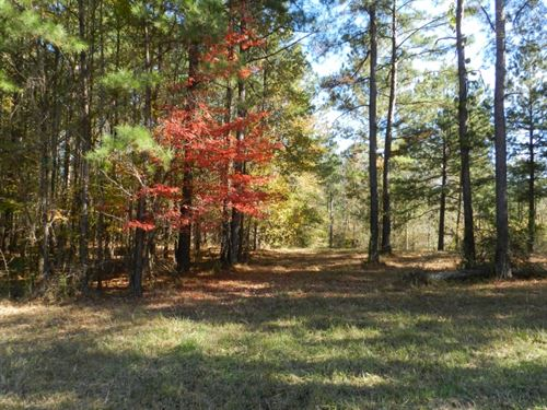 Beautiful Wooded Home Sites : Milledgeville : Baldwin County : Georgia
