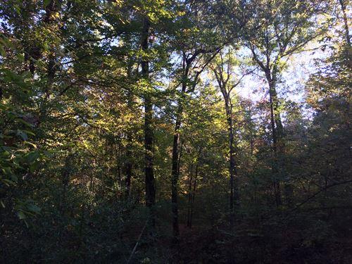 Louisiana Rec, Hunting Property : Winnfield : Winn Parish : Louisiana