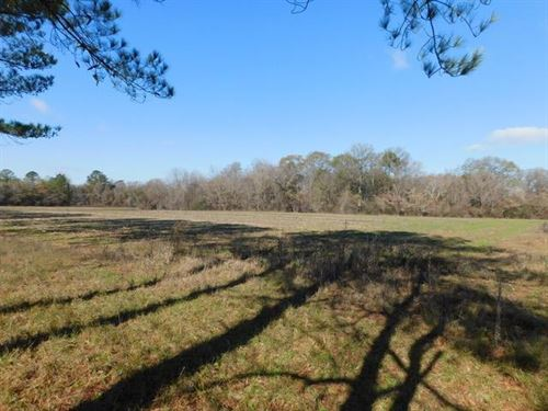 28Ac Mini Farm, Endless Potential : Montezuma : Macon County : Georgia
