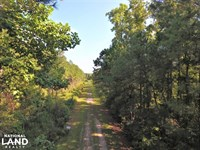 White Oak River Timber Tract : Maysville : Onslow County : North Carolina