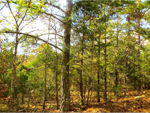 Recreational, Acreage, Homesite : Mammoth Spring : Fulton County : Arkansas
