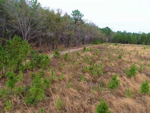 91.39 Acres Hunting / Timberland : Milan : Telfair County : Georgia