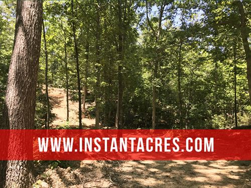 19 Acres With Huge Deer And Timber : Mountain View : Howell County : Missouri