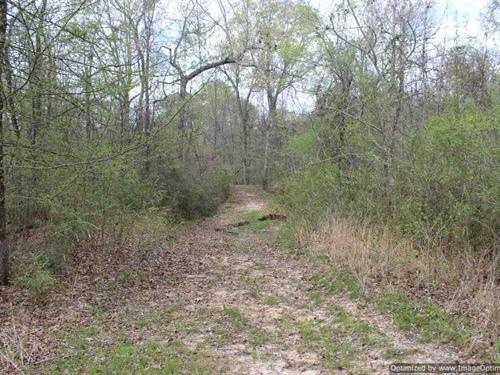 Hunting Tract : Satartia : Yazoo County : Mississippi