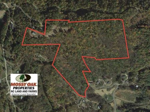 30.96 Acres of Timber And Recreati : Burnsville : Yancey County : North Carolina