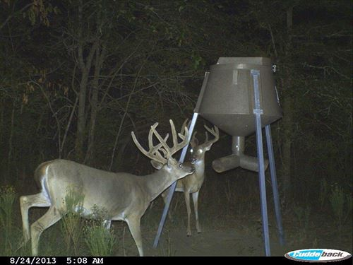 Whitetail Haven : Gray : Marion County : Texas