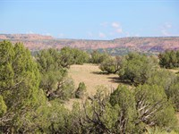 153 Ac New Mexico Wilderness Ranch : Fence Lake : Catron County : New Mexico