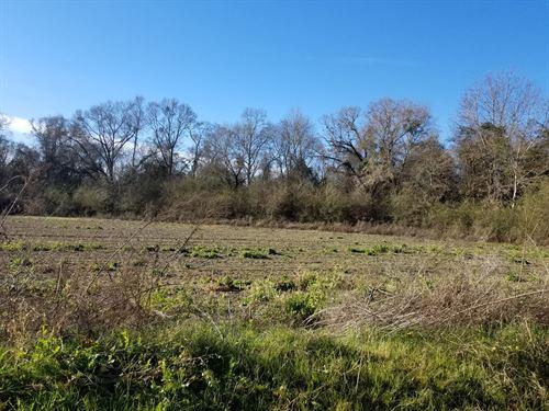 63 Acre Corner Tract Lafollette Rd : Slocomb : Geneva County : Alabama