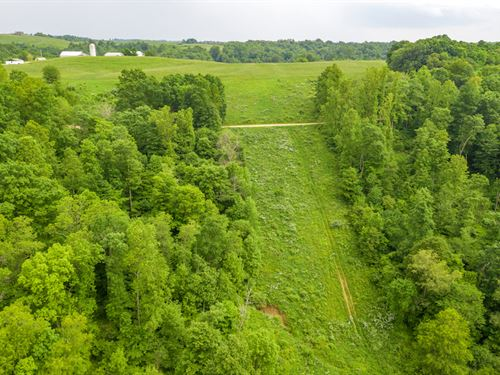 Gravel Lick Rd, 134 Acres : Port Washington : Tuscarawas County : Ohio