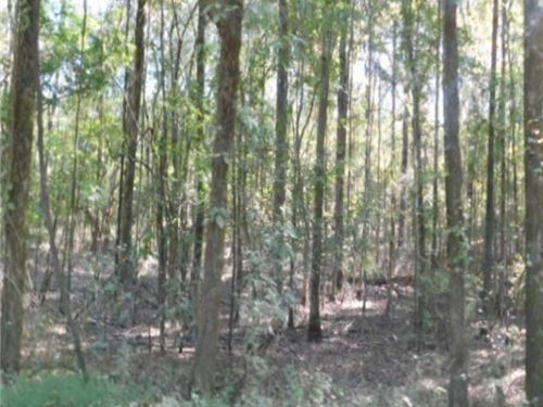 79 Acres In Madison County In Ridge : Ridgeland : Madison County : Mississippi