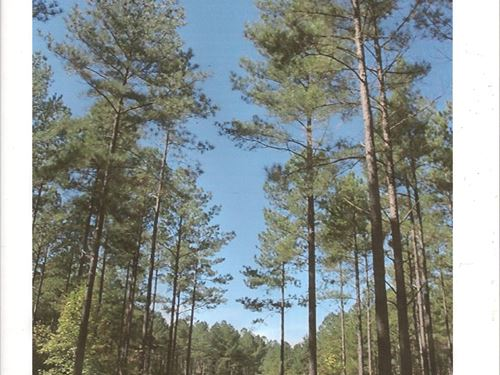 Maynard Road Tract : Abbeville : South Carolina