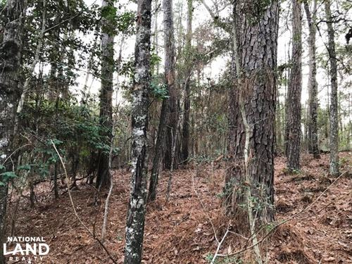 Atypical Timber And Hunting Propert : Lumberton : Marion County : Mississippi