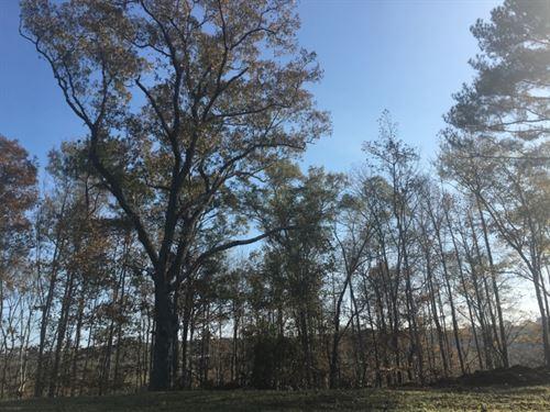 160 Acres In Attala County In Kosci : Kosciusko : Attala County : Mississippi