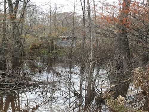 100 Acres In Holmes County In Tcula : Tchula : Holmes County : Mississippi
