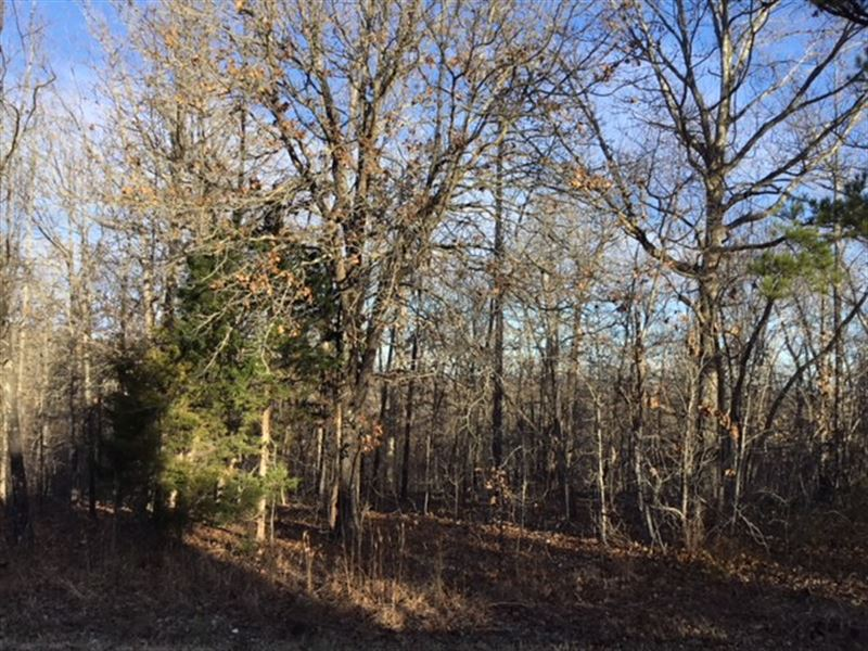 Wooded Land In Southern Missouri : Cass : Texas County : Missouri