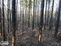 Yalobusha County Young Timber Inves : Coffeeville : Yalobusha County : Mississippi