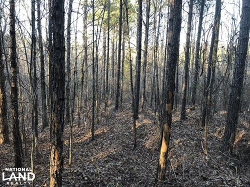 Yalobusha County Young Timber Inves : Coffeeville : Yalobusha County : Mississippi