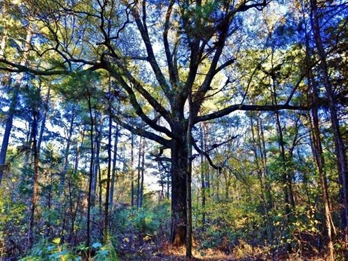 78 Acres Of Recreational Timber Lan : Shreveport : Caddo Parish : Louisiana