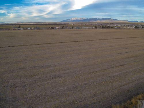 Irrigated Farmland Surface : Vado : Dona Ana County : New Mexico