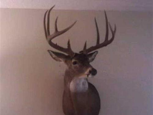 Macon County Pasture, Timber : Elmer : Macon County : Missouri
