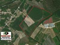 113 Acres of Timber And Farm Land : Raeford : Hoke County : North Carolina
