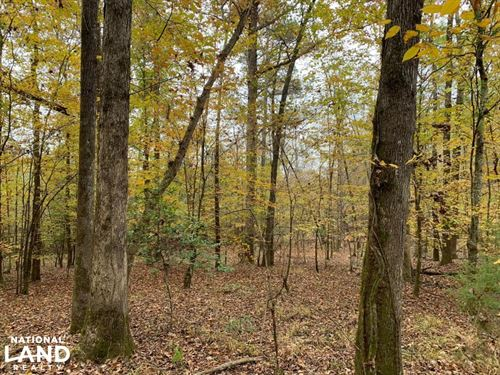 Sipsey Farm : Fayette : Tuscaloosa County : Alabama