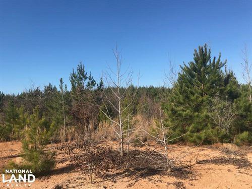Lindsey Road Kennedy Hunting Tract : Kennedy : Lamar County : Alabama