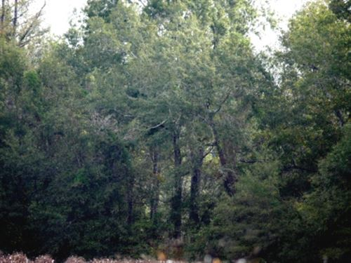 Beaverdam Creek : Waynesboro : Burke County : Georgia