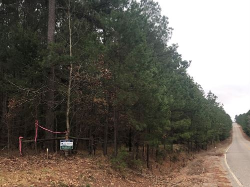 Recreational Pine Timber Land : Rosston : Nevada County : Arkansas