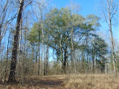 Riverfront Private Ramp Peaceful : Juliette : Jones County : Georgia