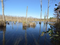 593+/ Ac Little Ohoopee River Tract : Harrison : Washington County : Georgia