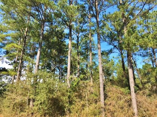 182 Acre Timberland Investment Prop : Seminary : Covington County : Mississippi