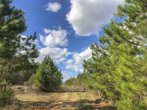 703 Acres Pete Garrett Road : Goodrich : Polk County : Texas