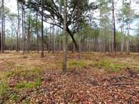 Ashepoo Crossing : Green Pond : Colleton County : South Carolina