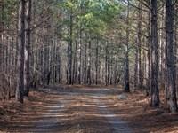 Abner Mountain Retreat : Star : Montgomery County : North Carolina