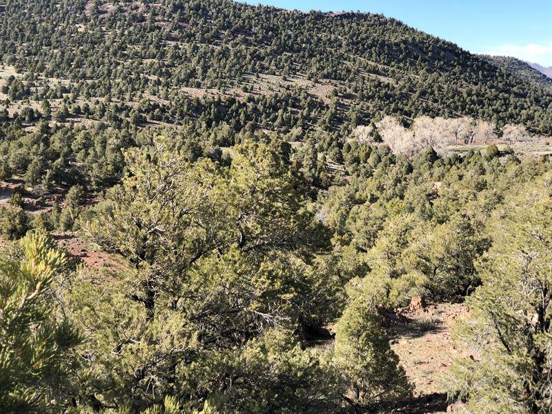 40 Acres Vacant Land Virginia City Ranch For Sale In Reno Storey County Nevada 187474 Ranchflip