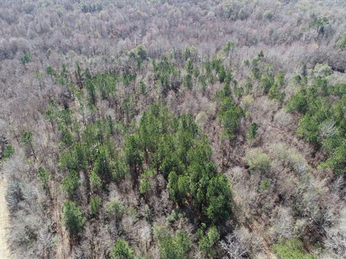 40 Acres On Brier Creek : Keysville : Burke County : Georgia