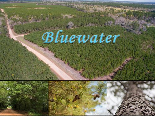 14 Acres Bluewater T3-6 : Livingston : Polk County : Texas