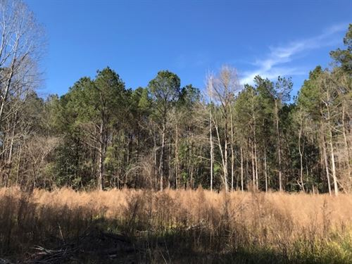 25 Acres On Fords Creek Road In Wil : Woodville : Wilkinson County : Mississippi