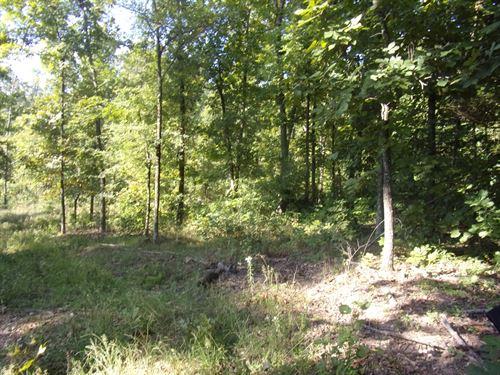 Timber Land, Deer, Turkey Hunting : Maynard : Randolph County : Arkansas
