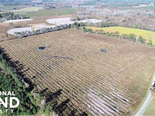 McGaw Tract : Windsor : Bertie County : North Carolina