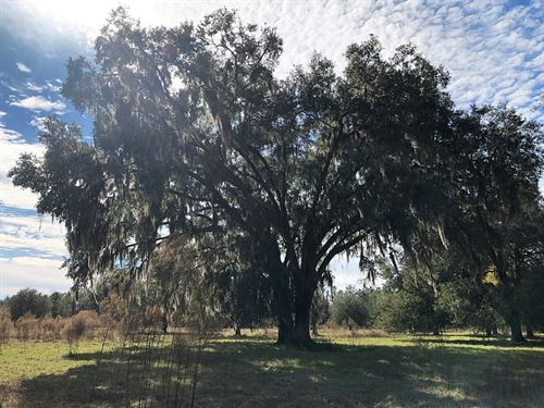 Beautiful 87 Acres For Sale : Lake City : Columbia County : Florida