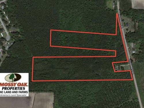 23.12 Acres of Timber And Hunting : Lucama : Wilson County : North Carolina