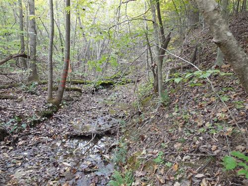 45.4 Acres Larue County, KY : Buffalo : Larue County : Kentucky