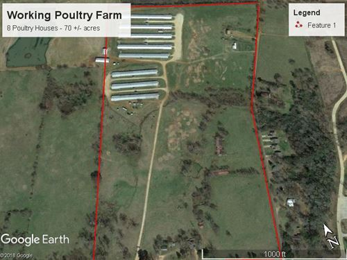 Working Poultry Farm : Nacogdoches : Texas