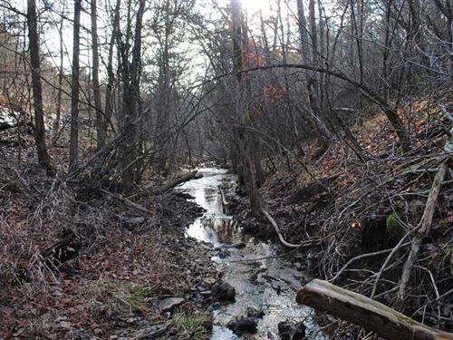40 Acres of Hill Country Hunting : Omaha : Boone County : Arkansas