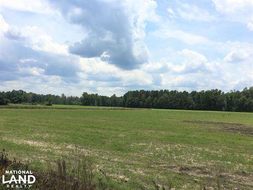 Back Swamp Hunting Land : Lynchburg : Lee County : South Carolina