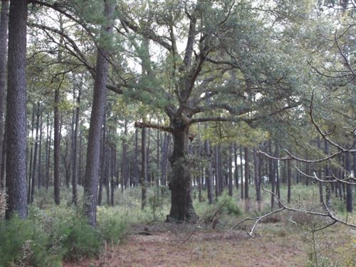 113 Acres In Walthall County In Tyl : Tylertown : Walthall County : Mississippi